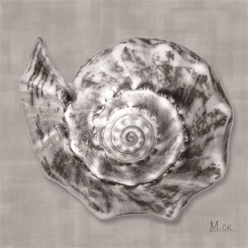 Shell II