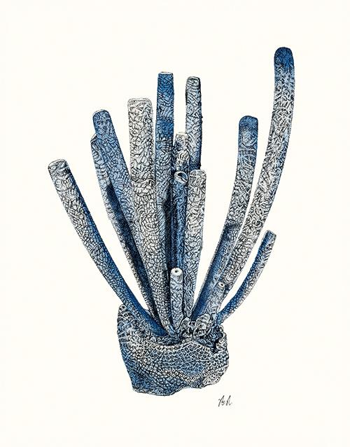 Coral Gesture Ⅳ
