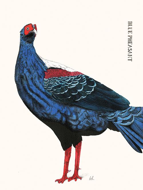 Cuckoo Cuckoo Ⅳ