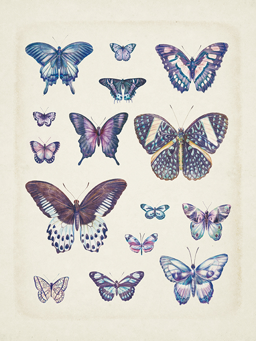 Butterflies On Slate Ⅰ