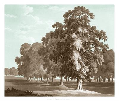 Serene Trees II