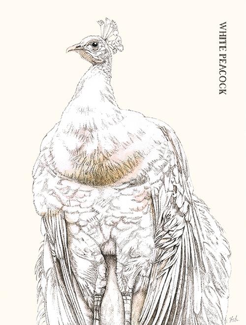 Cuckoo Cuckoo Ⅱ