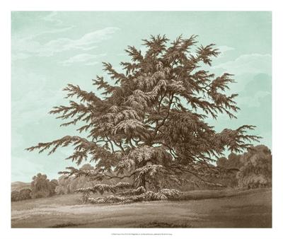 Serene Trees VI