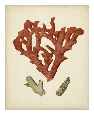 Antique Red Coral III