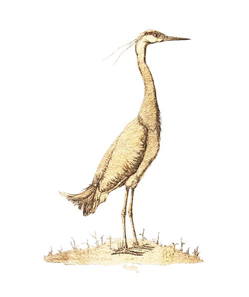 Golden Bird Ⅱ