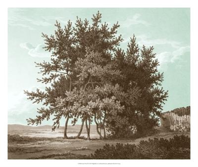 Serene Trees IV