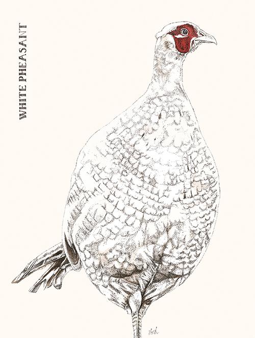 Cuckoo Cuckoo Ⅲ