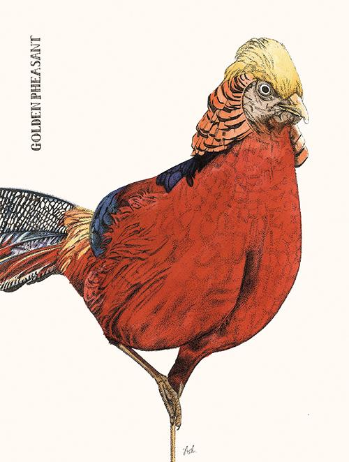 Cuckoo Cuckoo Ⅴ
