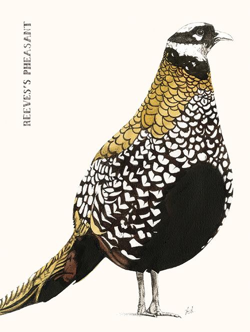 Cuckoo Cuckoo Ⅰ