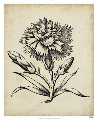 Distinguished Floral III