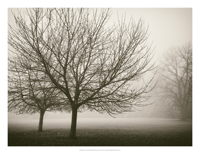 Trees In Fog VIII