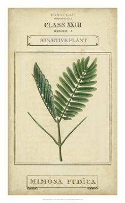 Linnaean Botany IV