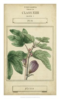 Linnaean Botany VI
