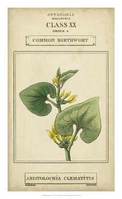 Linnaean Botany V