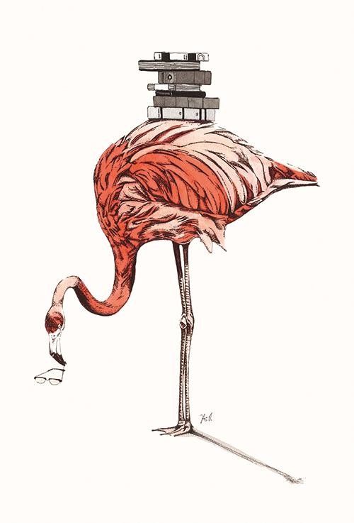 Flamingo Ⅴ