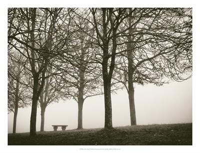 Trees In Fog VI