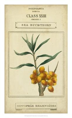 Linnaean Botany III