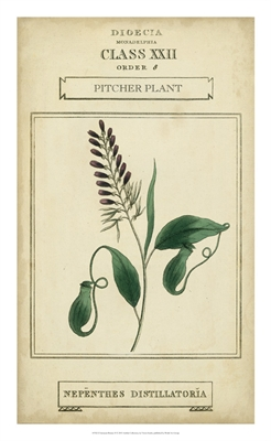 Linnaean Botany II