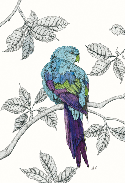 Avian Paradise III