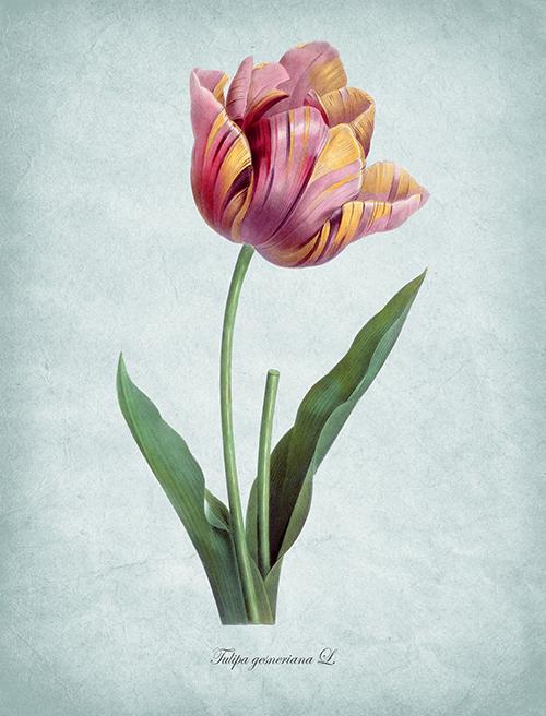 Flowers Bloom Ⅴ