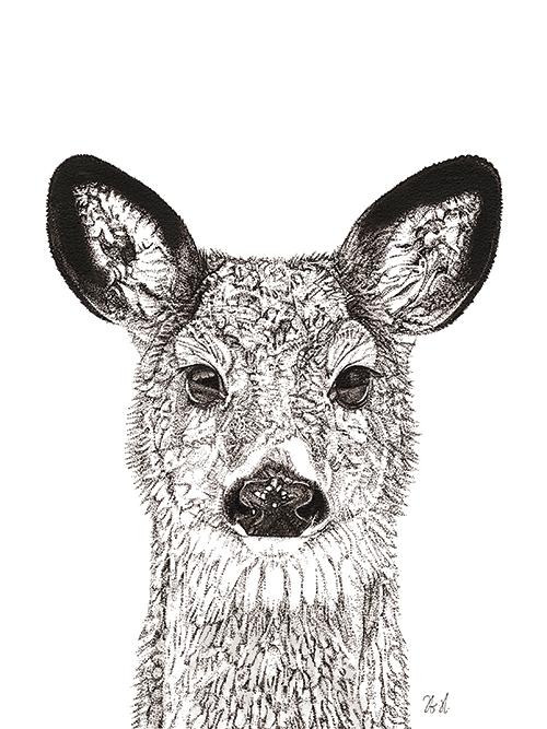 Animal Close Up II