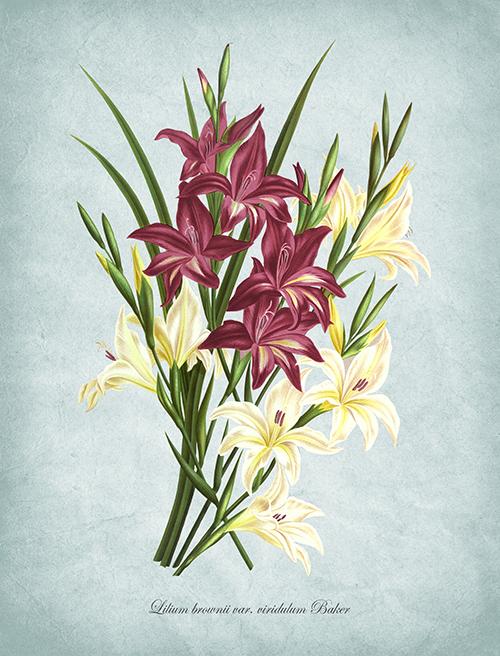 Flowers Bloom Ⅸ