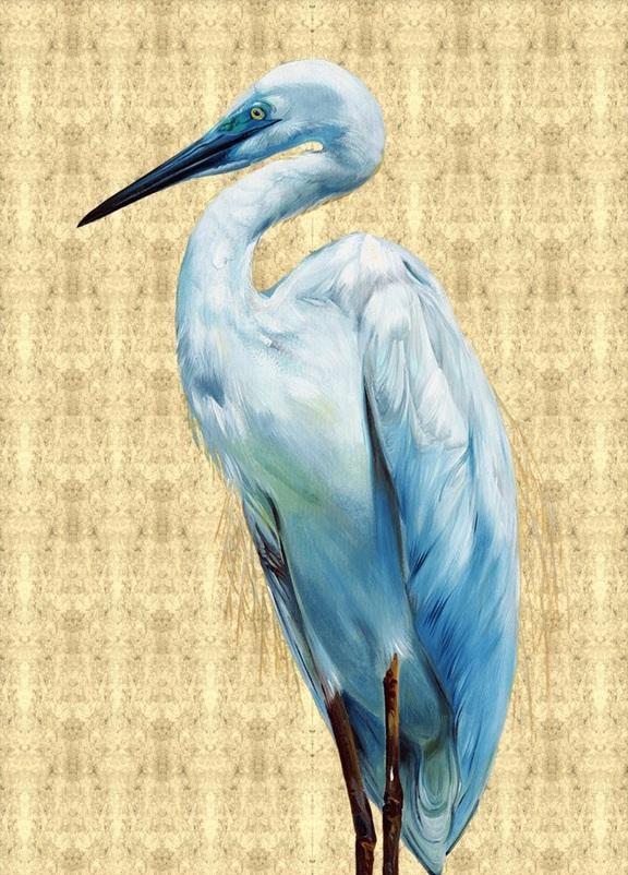 Glory Bird  II