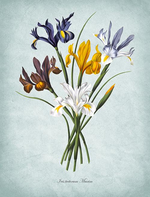 Flowers Bloom Ⅵ