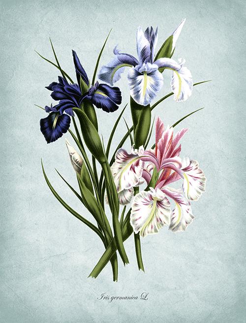Flowers Bloom Ⅰ