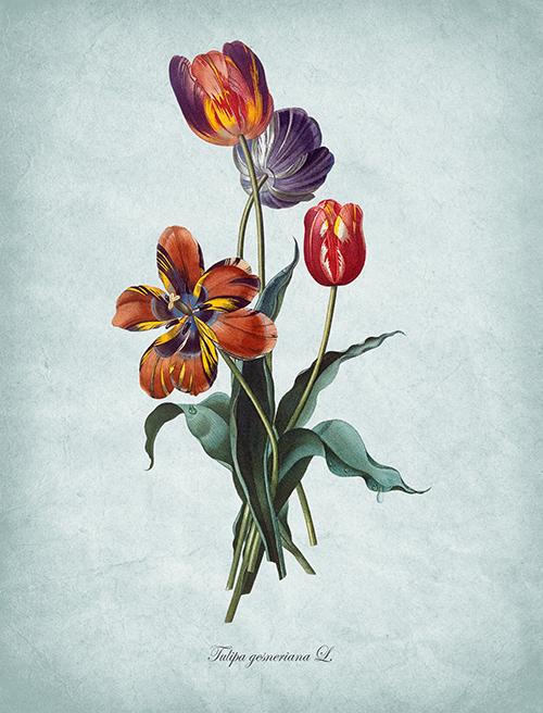 Flowers Bloom Ⅲ