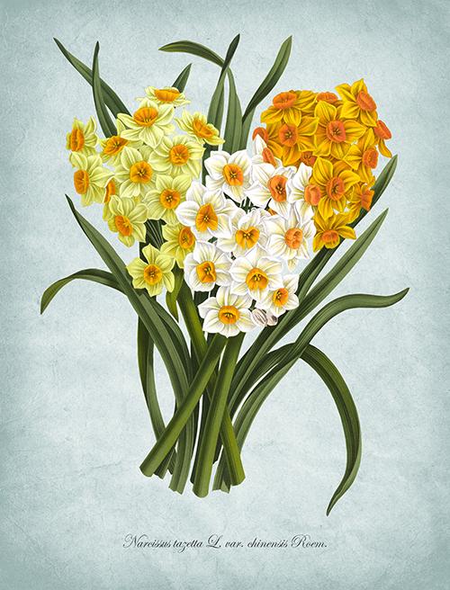 Flowers Bloom Ⅶ