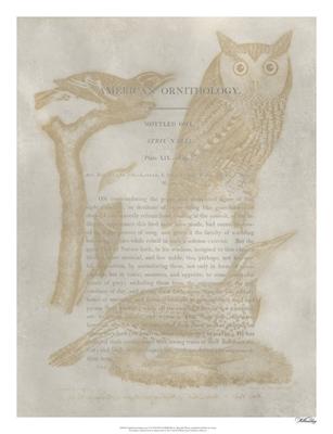 Ornithology Impressions VI