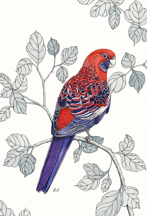 Avian Paradise V