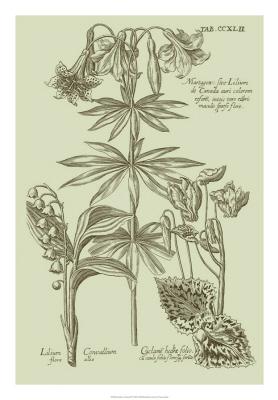 Garden Of Flora IV