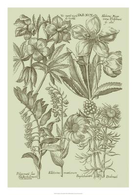 Garden Of Flora III