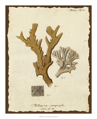Natura Coral I