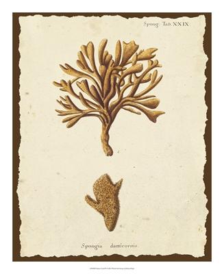 Natura Coral IV