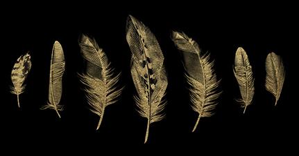 Golden Feather II