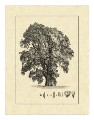 Vintage Tree IV