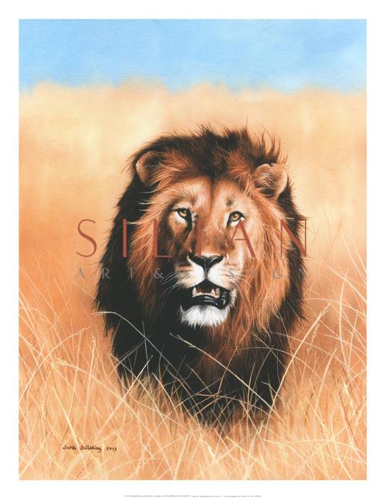 African Savannah Lion