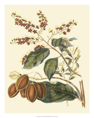 Foliage, Flowers & Fruit III