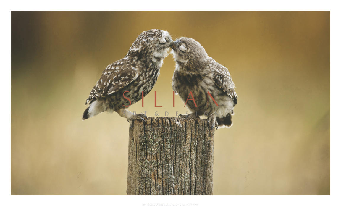 Another Little Peck