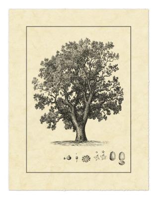Vintage Tree II