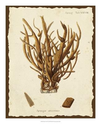 Natura Coral V