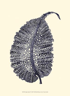 Indigo Kelp IV