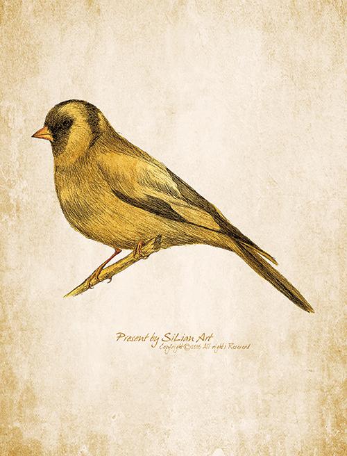 Lively Bird Ⅴ