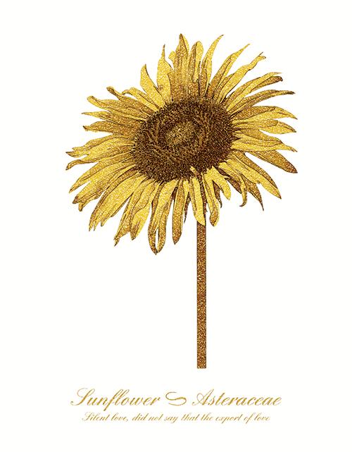 Golden Flower Ⅱ