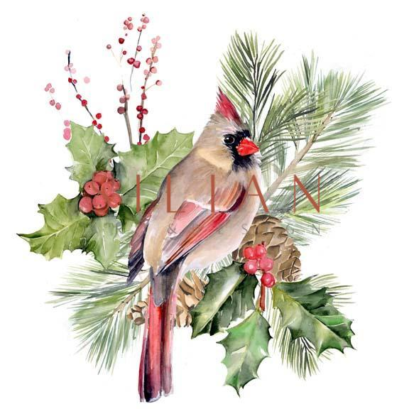 Cardinal Holly Christmas  II