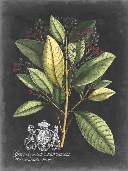 Royal Foliage IV