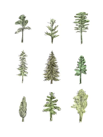 Collected Pines I